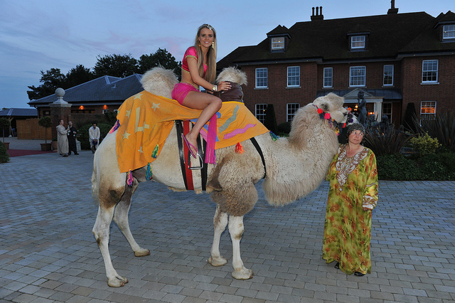 Camel at themed party